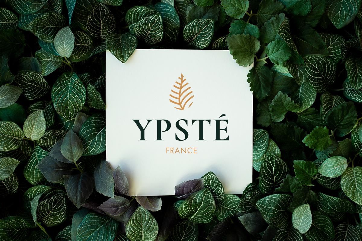 YPSTÉ identitée visuelle logo feuilles